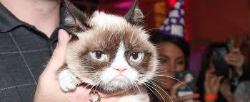 Cat Memes Generator - grumpy cat meme generator ma