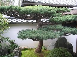 Zen Garden Design by Bonsai Garden Design Zen Garden Bonsai Mekobre Home Furniture Design