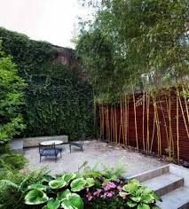 bamboo plants for small gardens growing and maintaining bamboo
