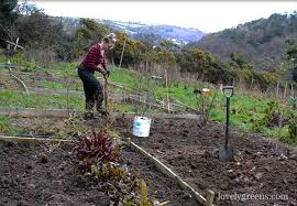 Garden Allotment Ideas Organic Gardening How To Use Black Plastic To Kill Weeds Lovely