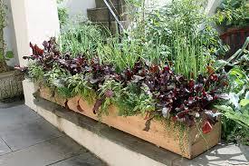 kitchen gardens ornamental veggie special 2 a gallery on flickr