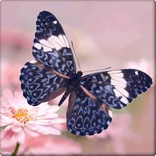 beautiful butterfly wallpapers android apps on play