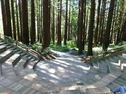 Berkeley Botanical Gardens Redwood Hitheater Concerts Here In Summer Picture Of Uc