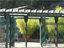 Ucr Botanical Gardens Botanic Gardens Visitor Information