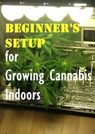 best light to grow pot best grow tent for growing cannabis 2017 reviews guide led grow
