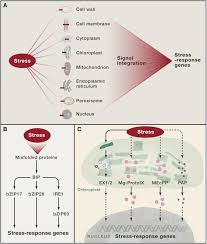 abiotic stress signaling and responses in plants cell