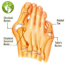 Top Foot Anatomy Bunions Clinton Twp Shelby Twp Macomb Mi Top Podiatrist