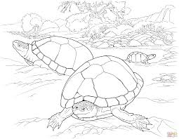 desert tortoise coloring page free printable coloring pages