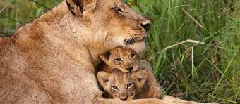 south africa holidays south africa safari with enchanting travels