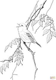 yellow warbler coloring page free printable coloring pages