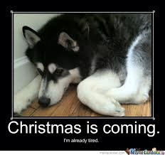 Cute Christmas Meme - it s november i meme it rumpydog