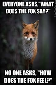 What Does The Fox Say Meme - it doesn t matter what does the fox say animals funpic hu
