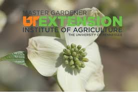 native plants of tennessee tennessee extension master gardener program