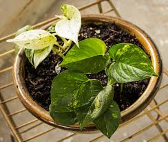 easy houseplants for people who lack green thumbs curb appeal