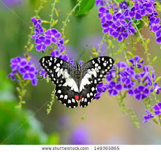 flower with butterfly stock images royalty free images vectors