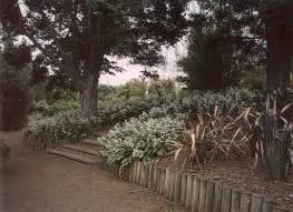 Southern California Botanical Gardens by Pacific Horticulture Society New Zealand Plants For Southern