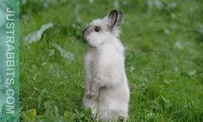 rabbits habitat