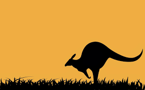 kangaroo wallpaper images reverse search