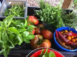 Florida Vegetable Gardening Guide by Grow Gainesville Urban Gardening Network