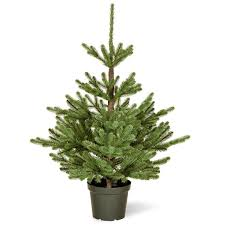 catchy collections of real christmas trees for sale catchy homes