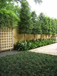 Backyard Screens Outdoor by Best 20 Privacy Plants Ideas On Pinterest Privacy Trellis