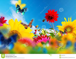 Pictures Of Garden Flowers by Sunny Garden Of Flowers And Butterflies Royalty Free Stock Photo