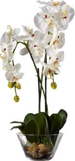 white orchid flower three posts phalaenopsis silk white orchid in glass vase reviews