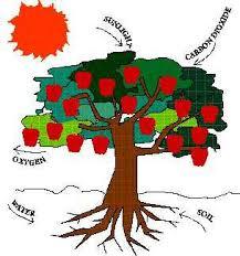 do trees eat lessons tes teach