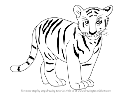 learn how to draw tiger cub zoo animals step by step drawing