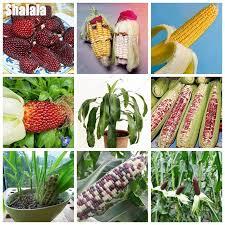 get cheap ornamental corn aliexpress alibaba