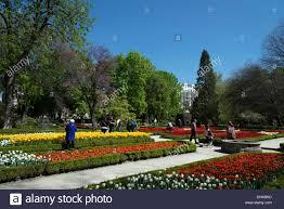 The Royal Botanic Gardens Tulips In The Royal Botanical Gardens Madrid Spain Stock Photo