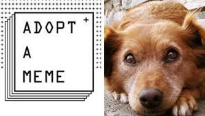 creative adoption caign adopt a meme is using real shelter