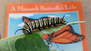butterfly tent safari 2015 nature into action