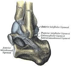 Posterior Inferior Tibiofibular Ligament Inferior Tibiofibular Joint Wikipedia
