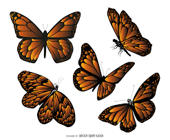 isolated butterfly drawing vector download