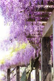 592 best kyoto pearl images on pinterest kyoto japan wisteria