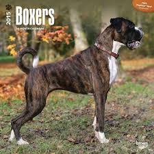 boxer dog umbrella boxers dogbreed gifts com boxer calendars