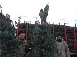 fresh cut christmas trees pahl u0027s market apple valley mn
