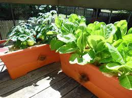 plant a one pot vegetable garden youtube