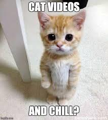 Meme Videos - cute cat meme imgflip