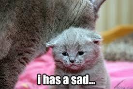 Lol Cat Meme - i has a sad i has a sad lolcat quickmeme