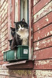 Cat Window Sill Perch 1058 Best Cats In The Window Images On Pinterest Windows