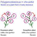 cross pollination in flowers