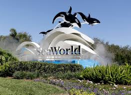 seaworld orlando thanksgiving as irma nears florida concern for animals a major issue 660 news