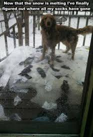 Funny Snow Meme - snow is melting dog meme