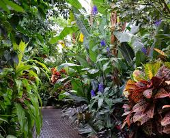 tropical house plants names darxxidecom