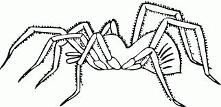 Spider Color Pages Download Spider Coloring Pages Bestcameronhighlandsapartment Com by Spider Color Pages