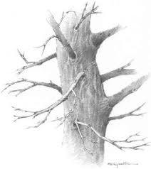 boughs limbs and foreshortening drawing nature joshua nava arts