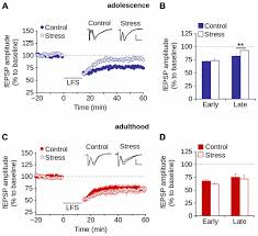 8877 Lifier Schematic Diagram Frontiers Synaptic Impairment In Layer 1 Of The Prefrontal
