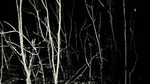 spooky png pov shot walking running through dark spooky forest at night stock